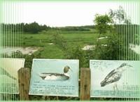 我的關鍵詞 無尾港水鳥保護區-宜蘭旅遊景點 旅遊,景點,生活 生活 link1p4