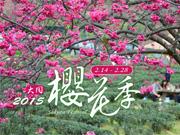 2015大同鄉櫻花季